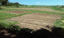 The garden in its early stage!